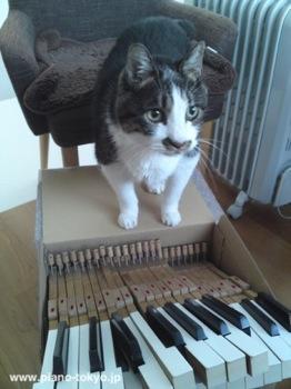 41neko_check_kimball_piano.jpg